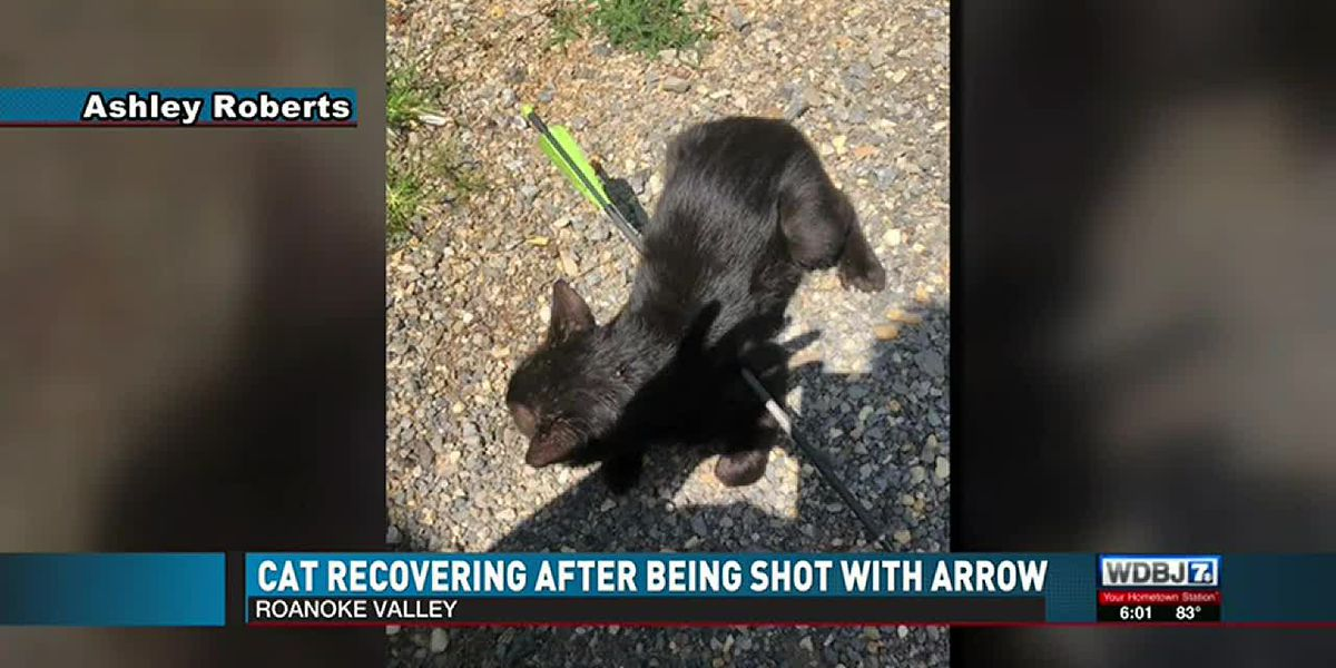 Neighbors find cat with arrow shot through its body