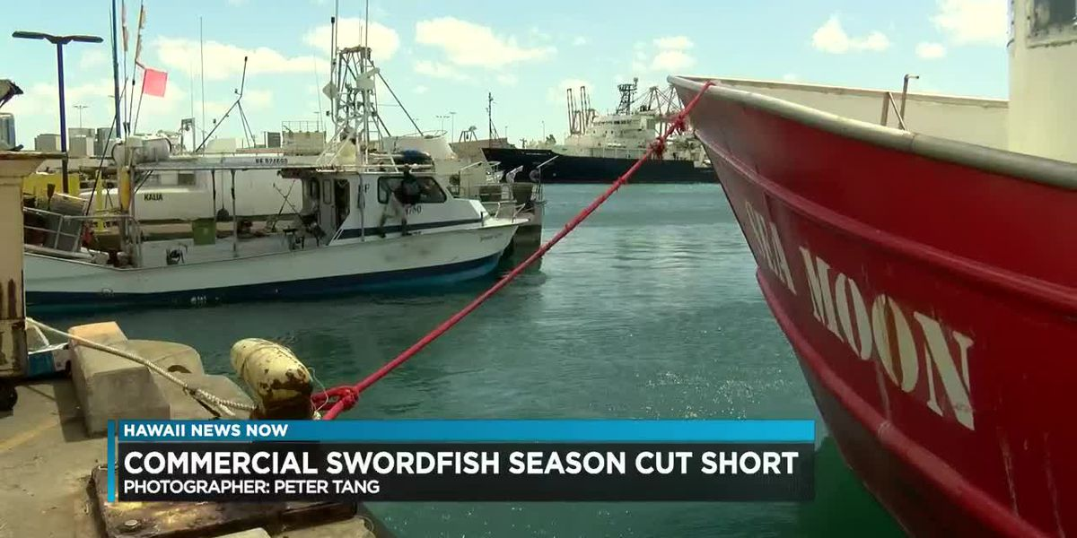 Turtle conservation rules cuts Hawaii's swordfish season short for 2nd year in a row