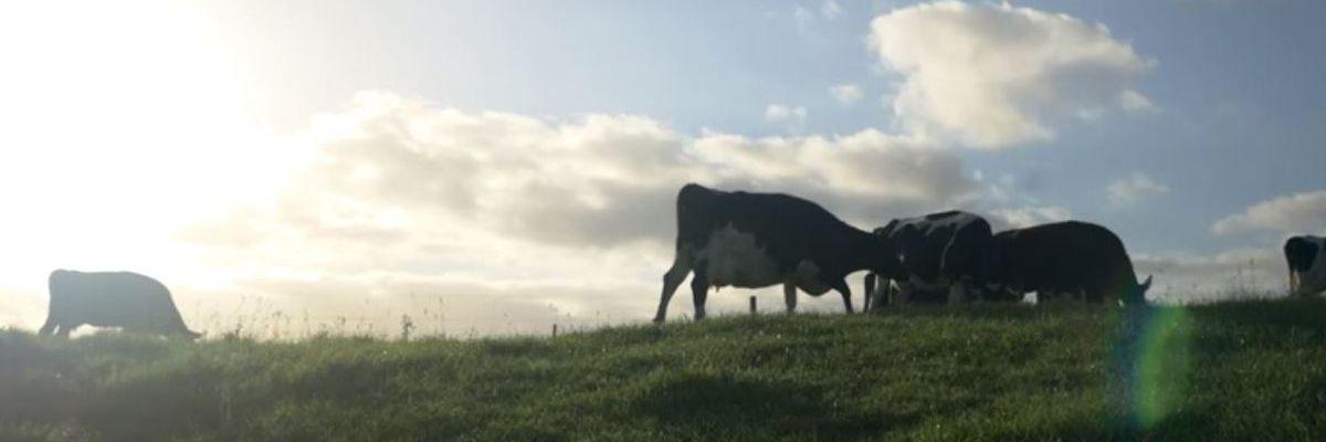 Taxpayers take loss on failed Kauai dairy plan