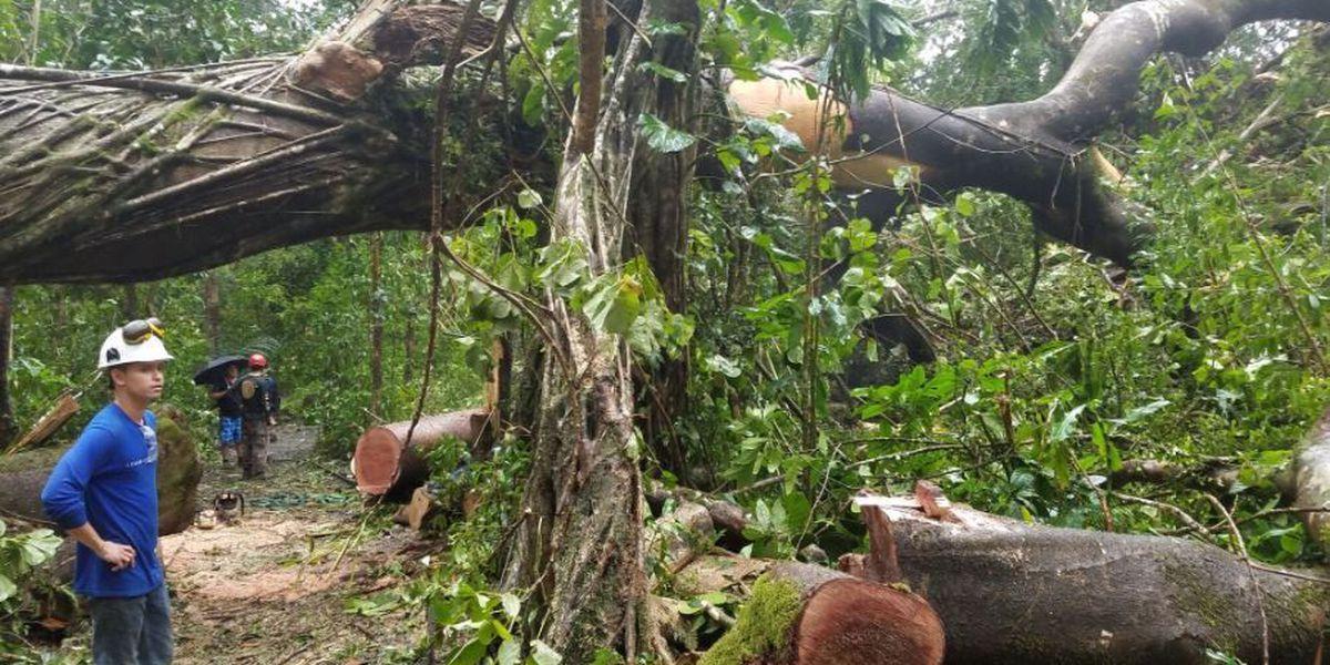 Manoa Falls trail closed as crews clear fallen tree