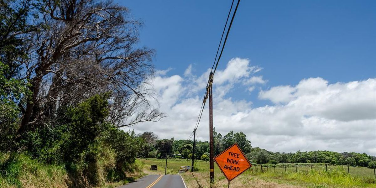 Emergency proclamation signed to remove hundreds of dead trees on Maui