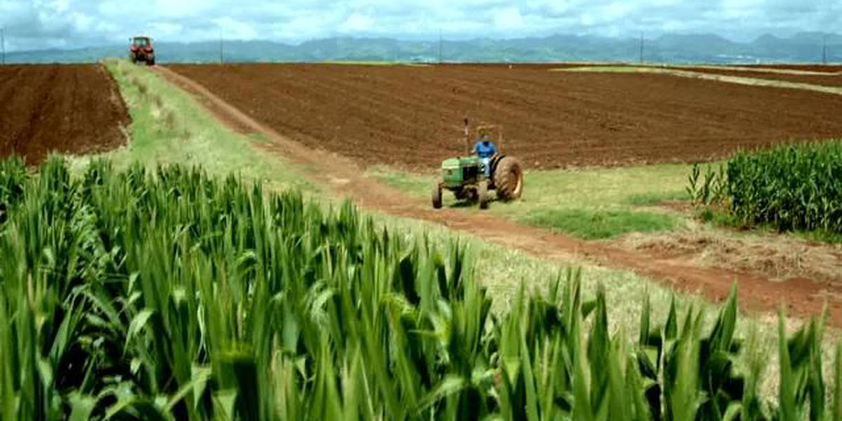 Battling outbreak, Hawaii faces small staff, pesticide fears
