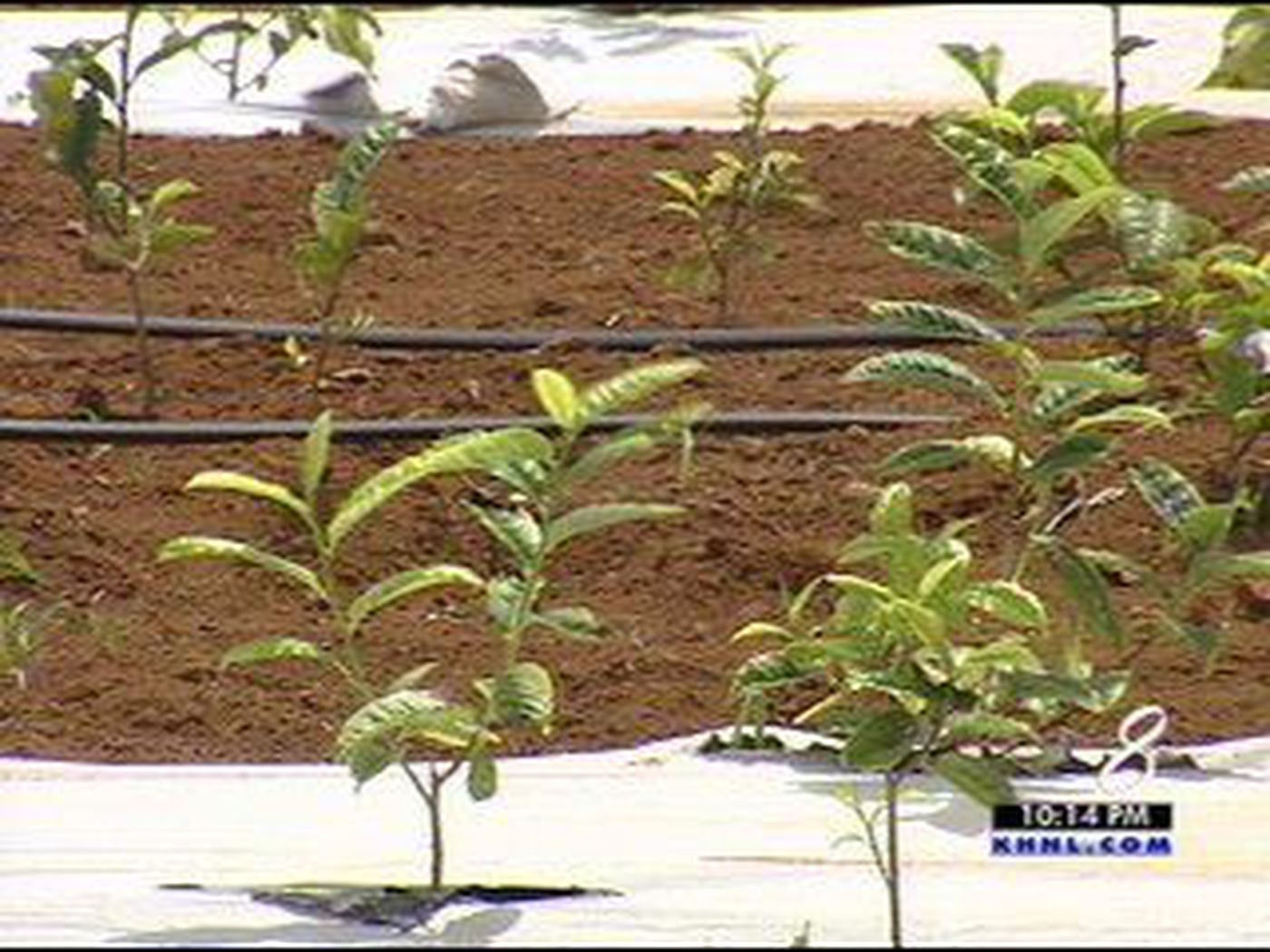 Homeowners required to farm on new Kauai agri-real estate