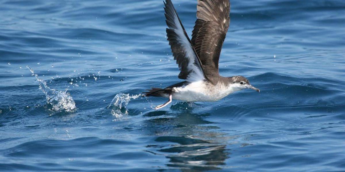Conservation groups sue DOT over endangered bird deaths