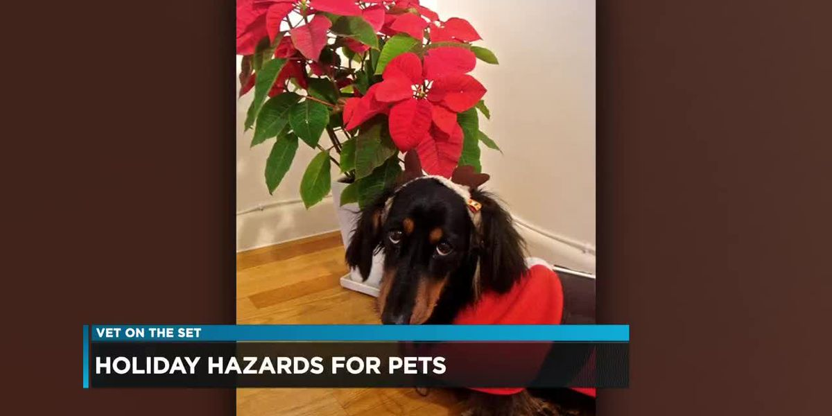 Vets ask to keep your pets safe during the holiday season