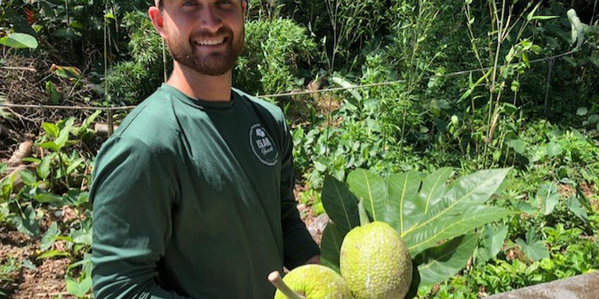Amid talk of boosting agricultural in Hawaii, could the ulu finally get its due?