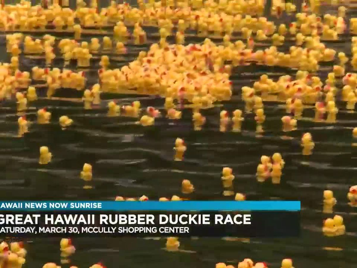 The Great Hawaii Rubber Duckie Race this weekend