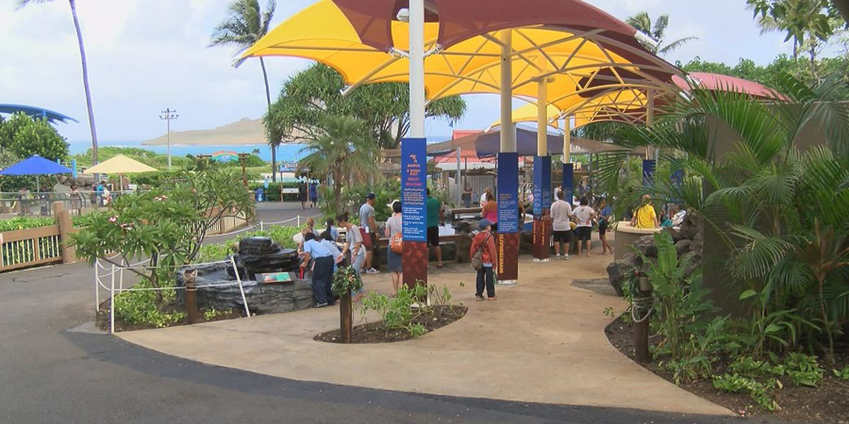 After nearly a year of being closed, Sea Life Park set to welcome visitors back