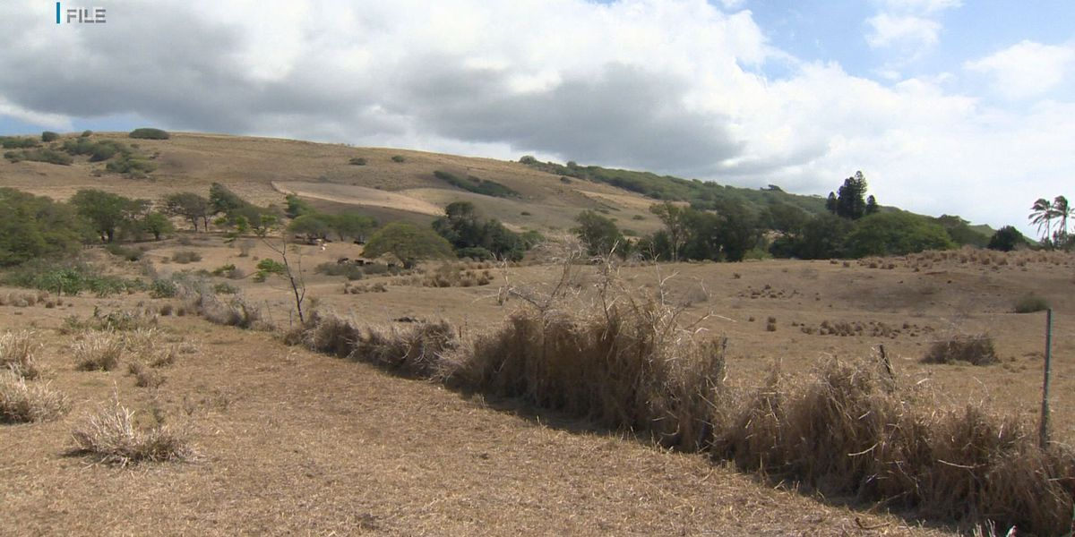 Ranchers hope for greener pastures amid Maui County's 'extreme' drought