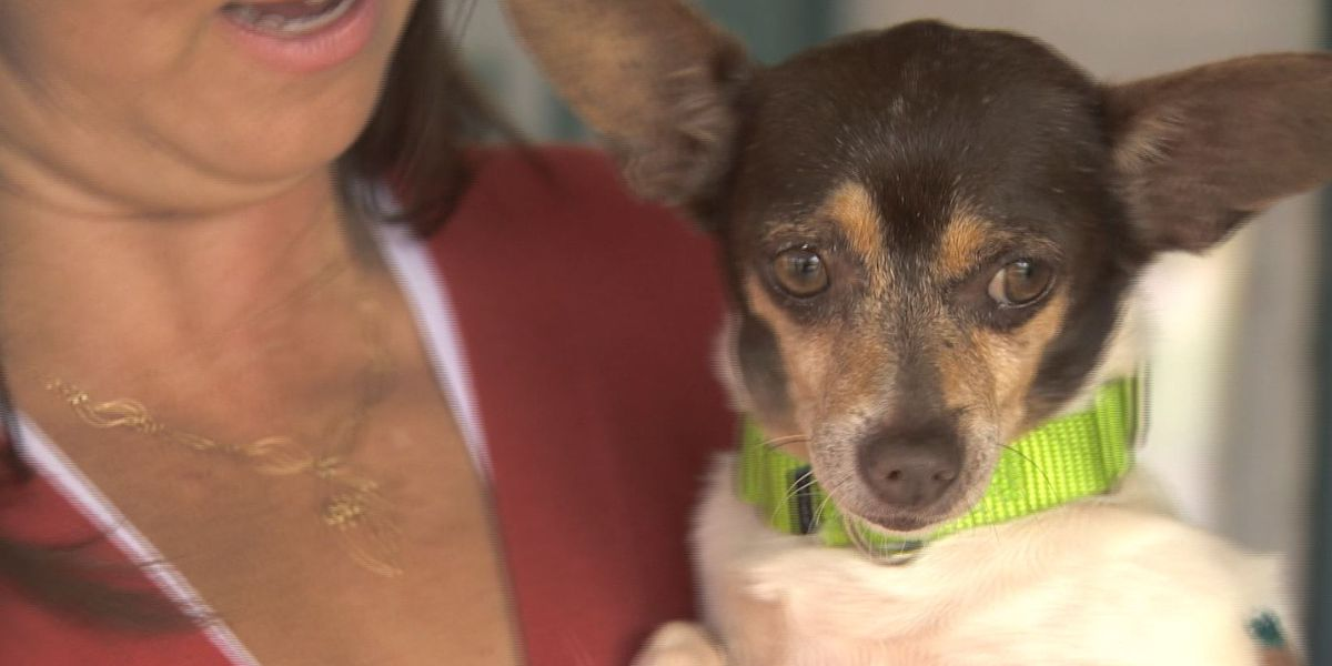 Looking for a pet? Hawaiian Humane Society hoping to 'clear the shelter' this weekend