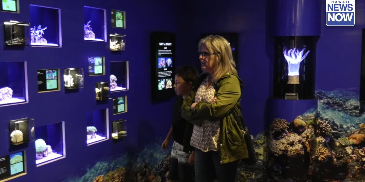 Waikiki Aquarium has a new coral exhibit