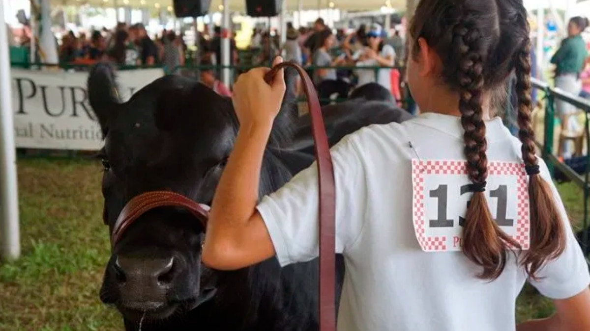 Hawaii State Farm Fair canceled, but organizers look to 2021