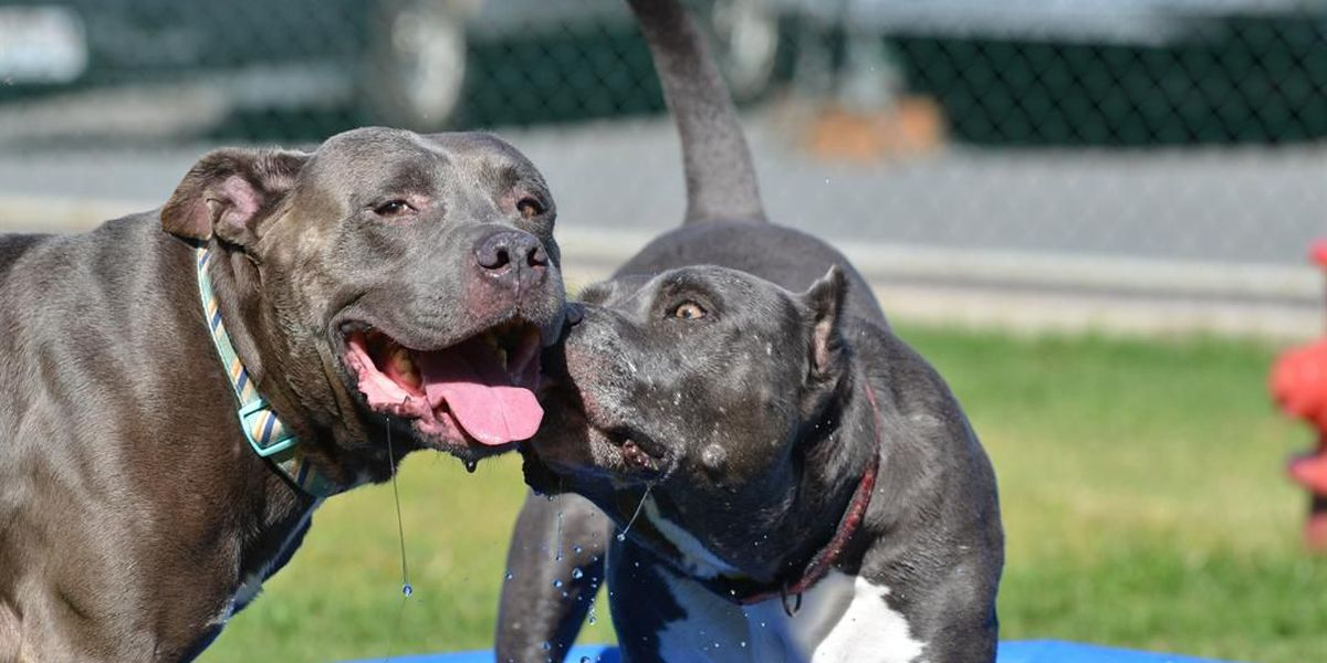 They're just 2 dogs in love — and they're looking for a good home