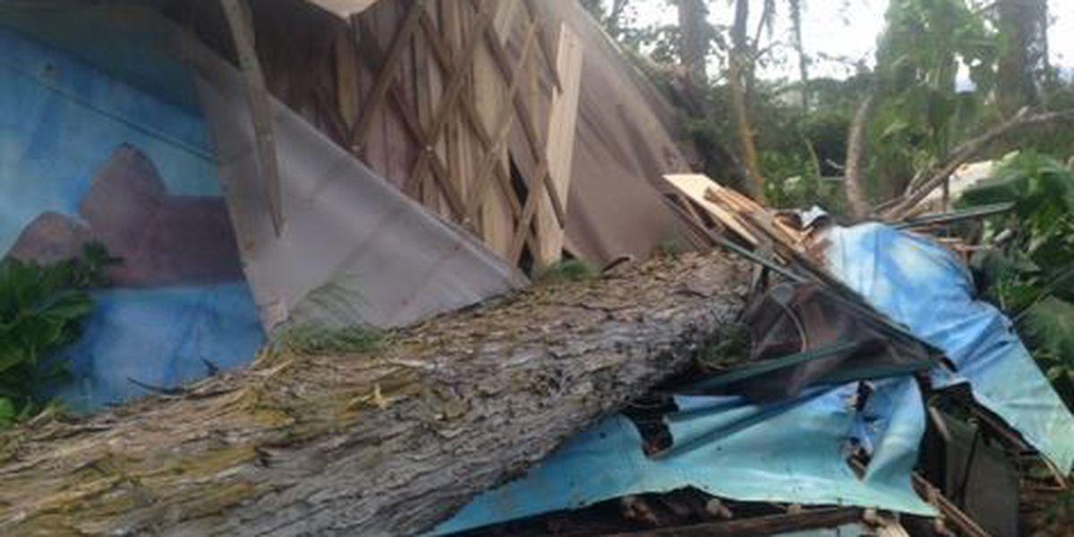 Tree falls, seriously injuring two women at Malaekahana