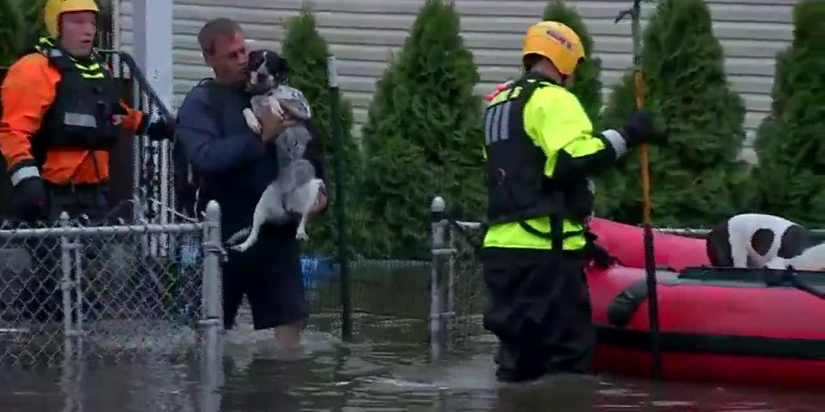 Raw: Dogs rescued from flood