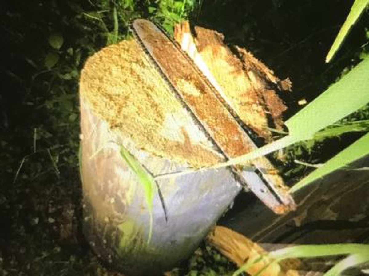 Here's what vandals used to cut down a utility pole on Oahu's North Shore