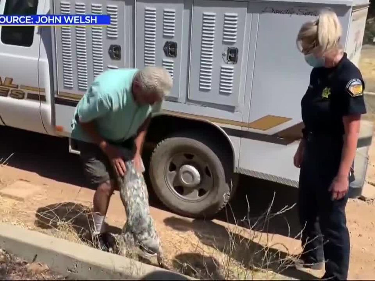 Dog lost during Calif. wildfire reunited with owner