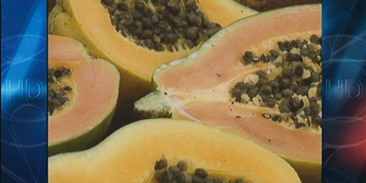 Hawaii considers growing algae from papaya for feed, fuel