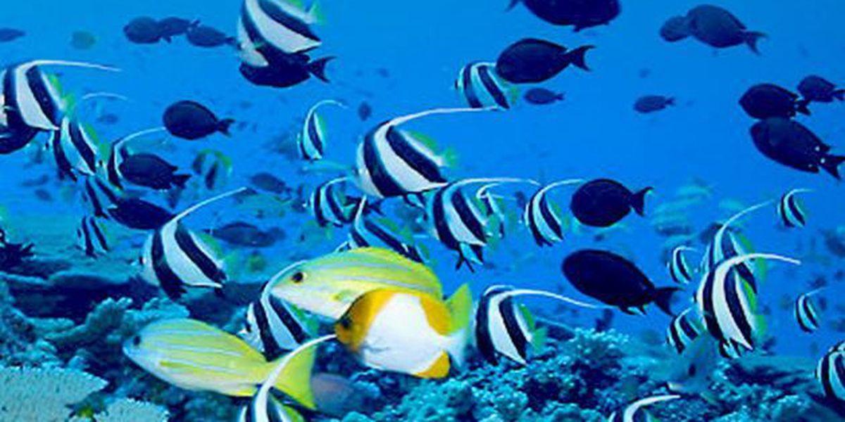Hawaii County councilwoman withdraws aquarium fish bills