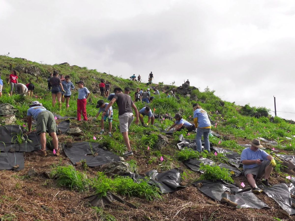 To cut down on emissions, UH students and volunteers plant 1,000 trees in a single day