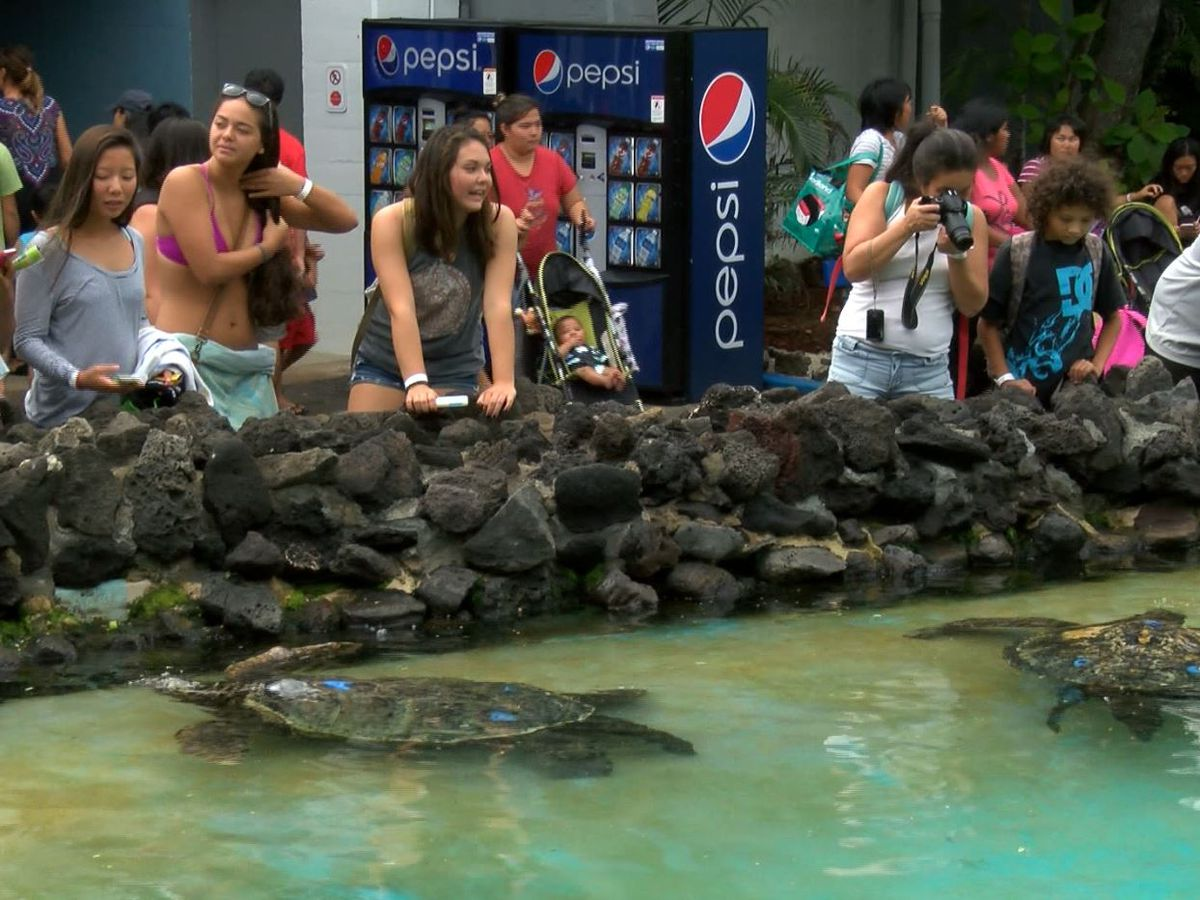 Sea Life Park under investigation for alleged safety violations