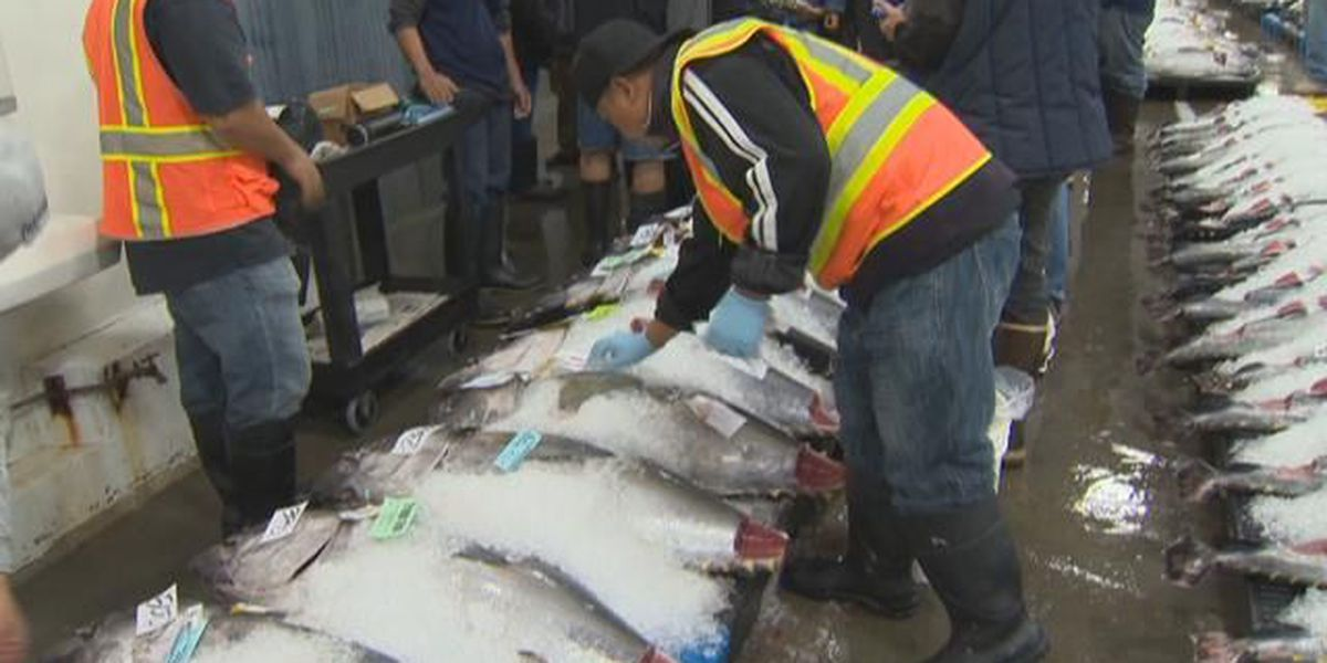 Solid holiday ahi haul helping keep prices down
