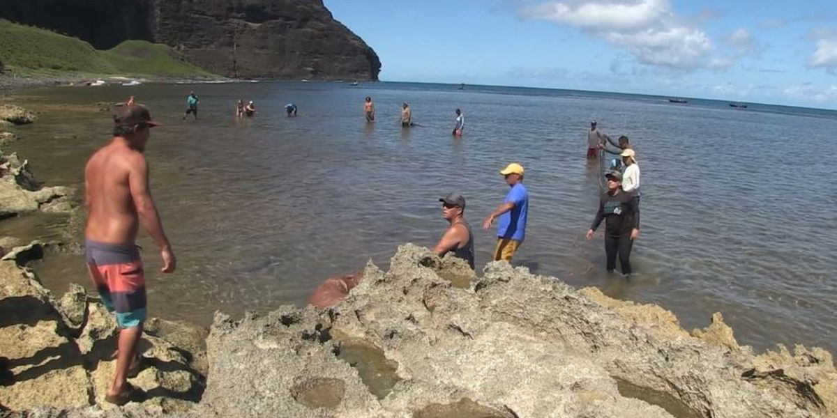 DLNR, fishermen tackle the black-chin tilapia invasion on Kauai's North Shore