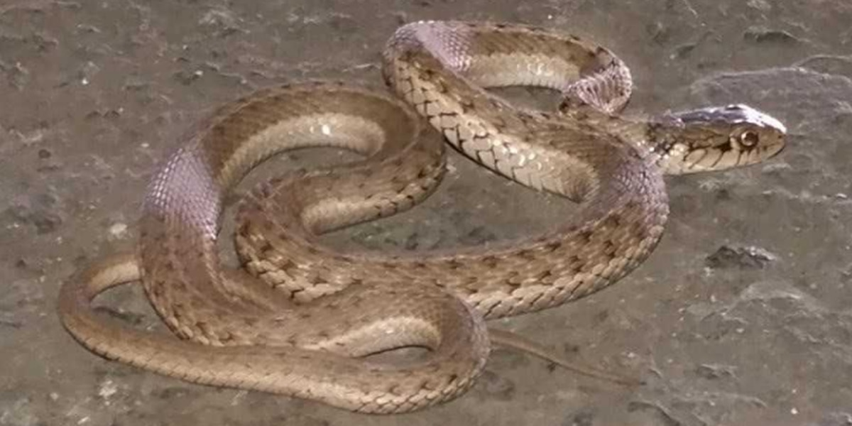 Workers discover foot-long snake at Honolulu Harbor