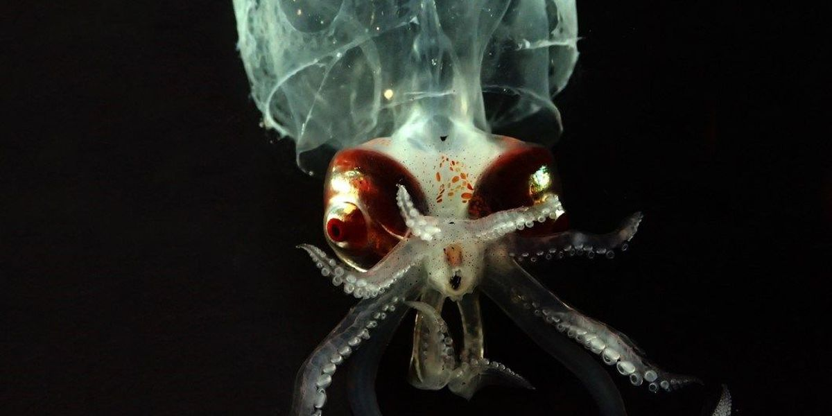 Researchers sample unusually rich deep-sea area off Hawaii