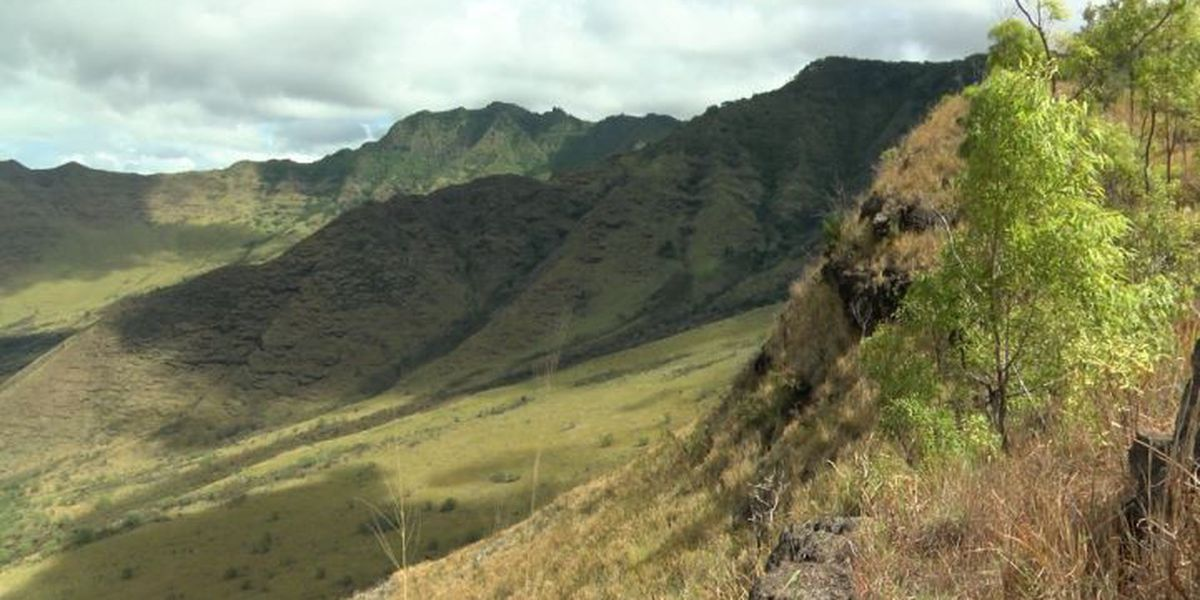 In the mountains of Waianae, a restoration project that could take centuries