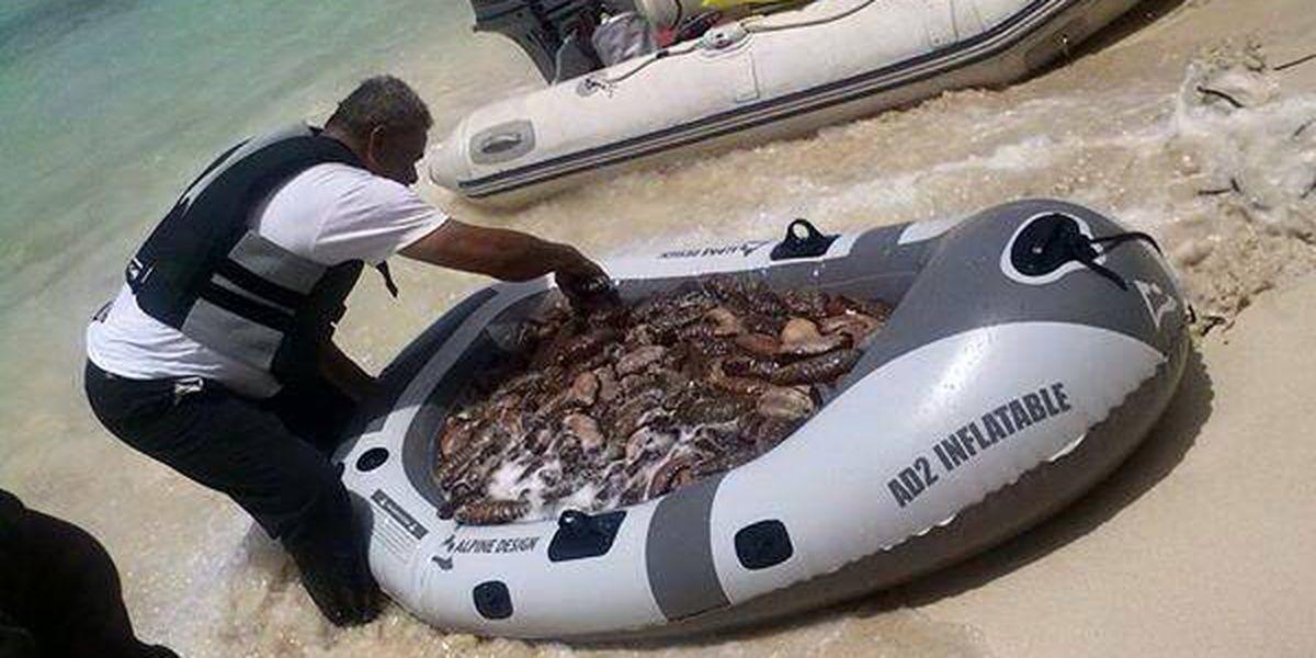 Hawaii passes emergency sea cucumber ban
