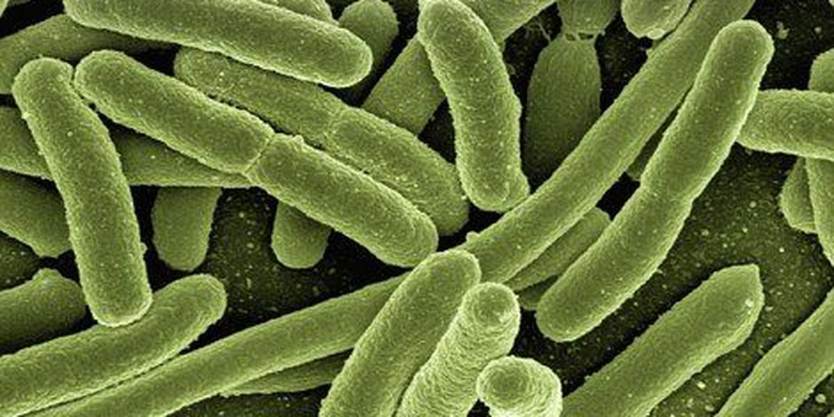 DOH investigating new case of Legionnaires' Disease on Oahu