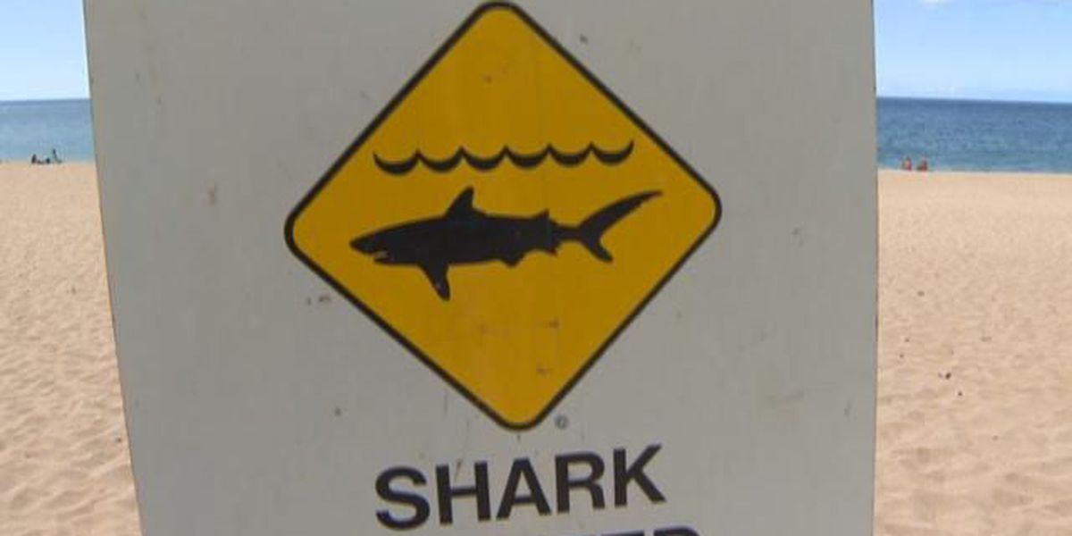 Beach at Makena State Park reopened after shark sighting