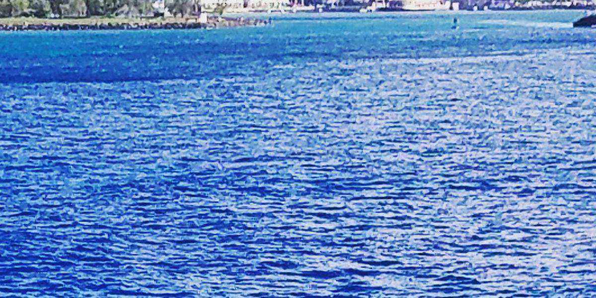 Humpback whales make a splash in Honolulu Harbor
