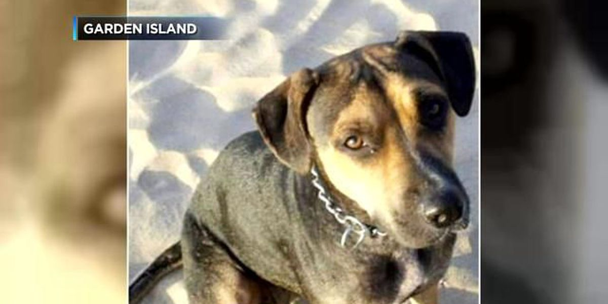 $5,000 reward offered in case of Kauai dog shot, paws and tail cut off