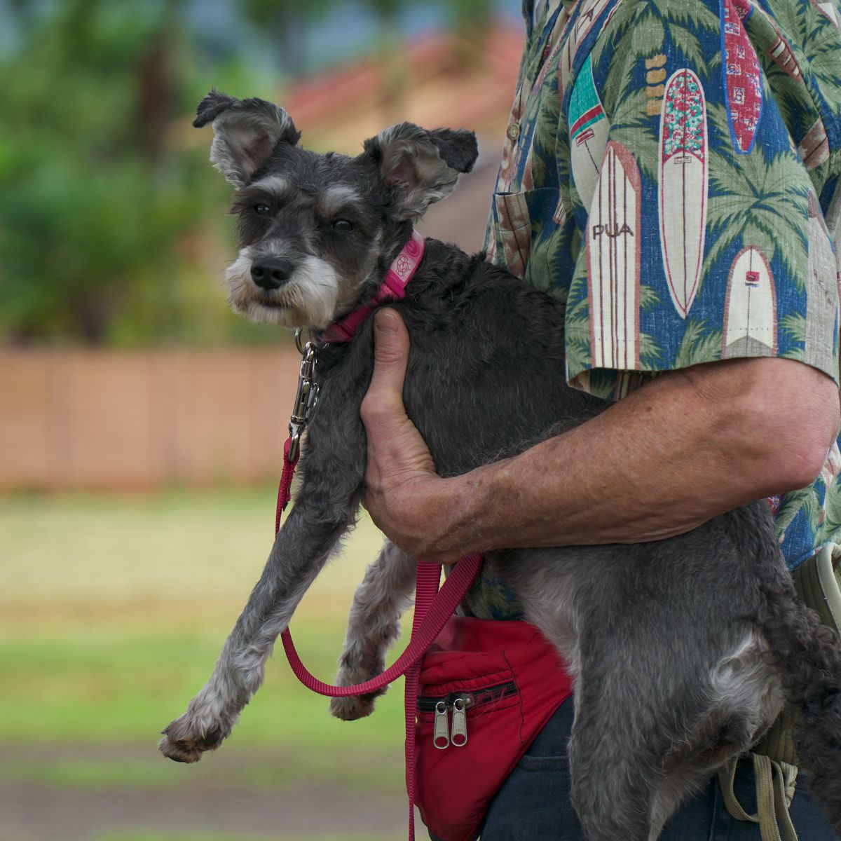 An off-leash dog park is coming to Central Oahu