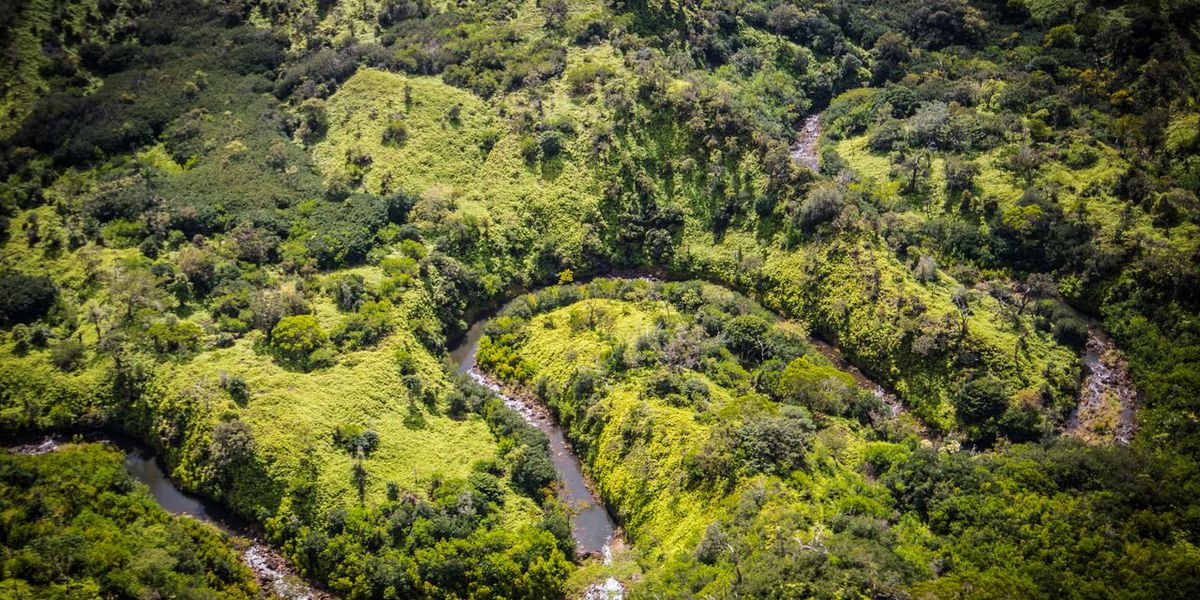 2,900 acres in Central Oahu purchased for reforestation, recreation
