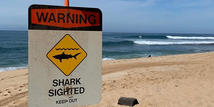 Warning signs posted at Makaha Beach after shark bites surfboard