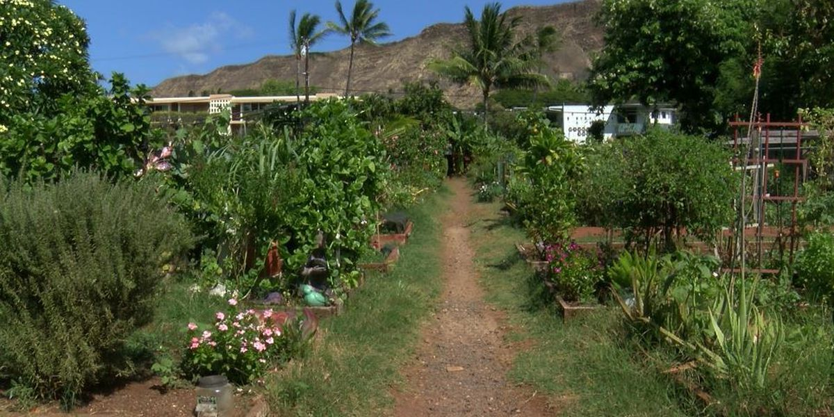 Community gardeners worry maintenance is falling behind amid ongoing closures