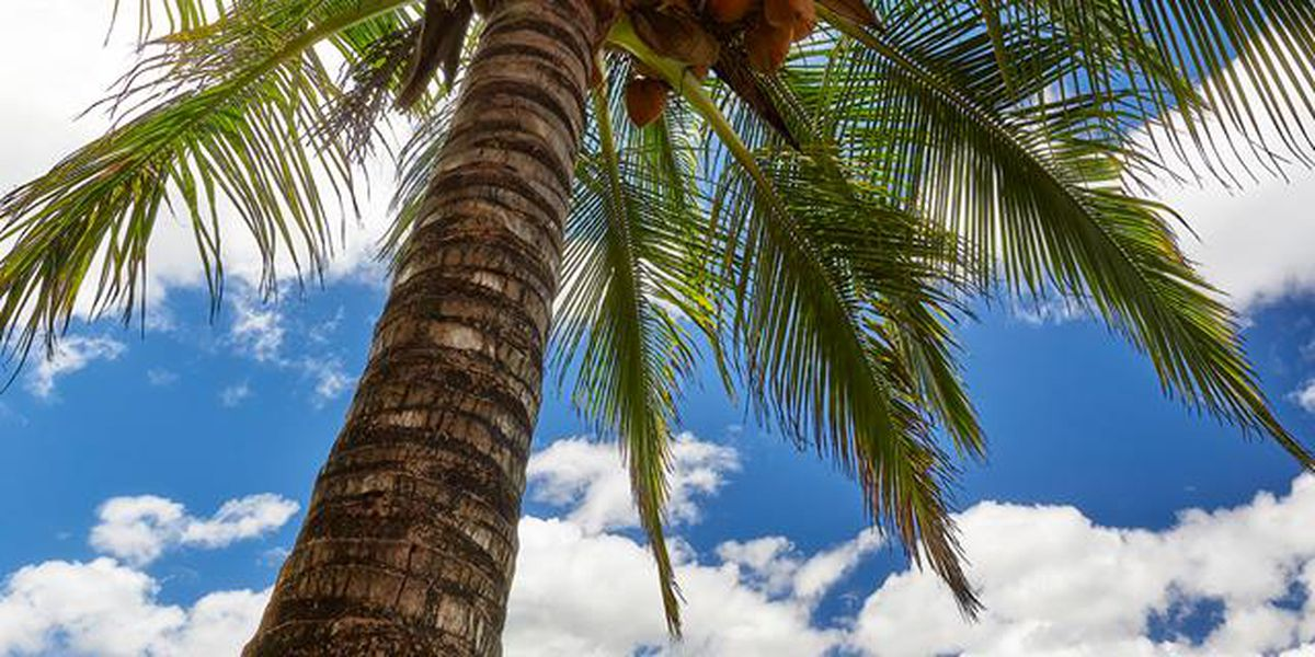 Forecast: The trade winds are returning -- but not for everyone!