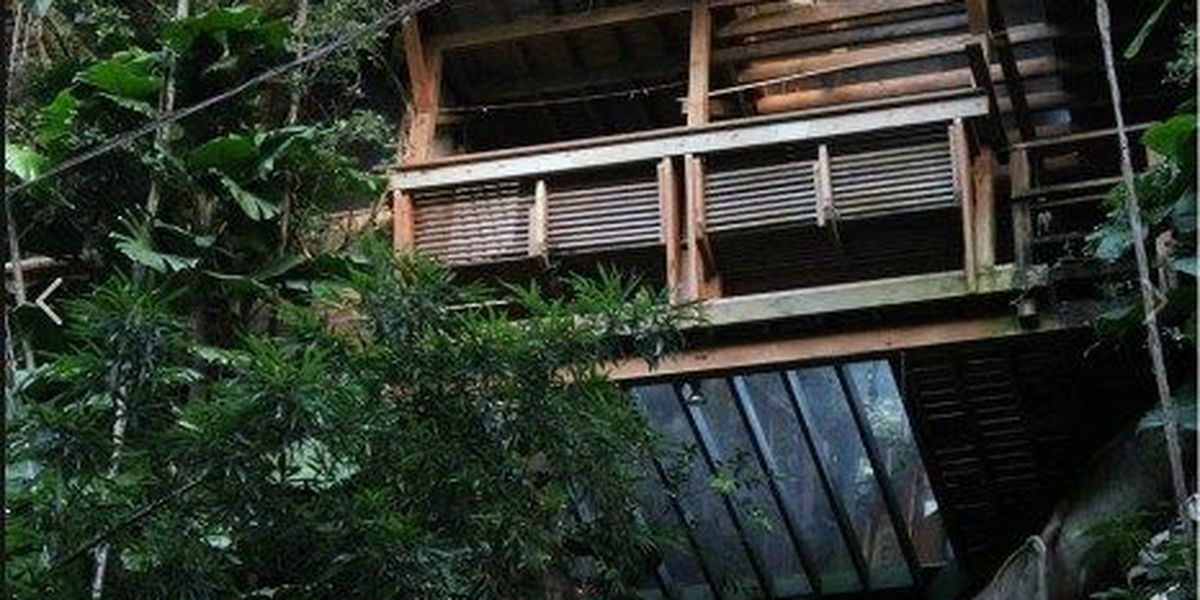 Councilwoman: Giant treehouse in Manoa is site of illegal 'retreat'