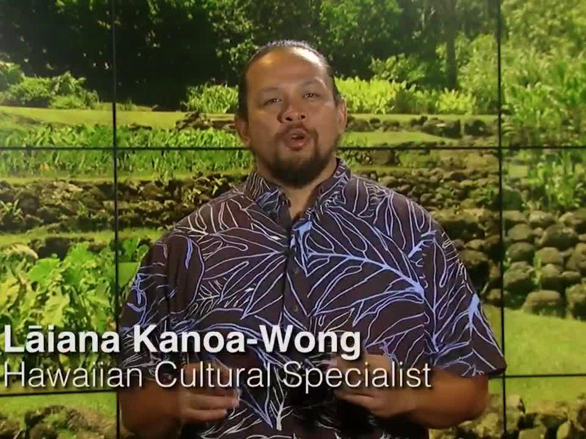 Hawaiian Word of the Day: Mahi'ai