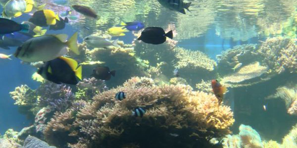 Board rejects Hawaii commercial aquarium fishing statement