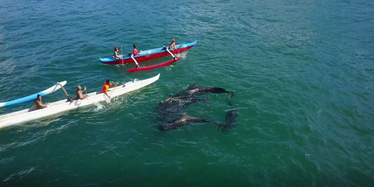 PHOTOS: Pilot whales dead after Kauai beach stranding