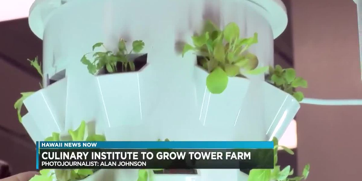 UH Culinary Institute to install 60 vertical farms