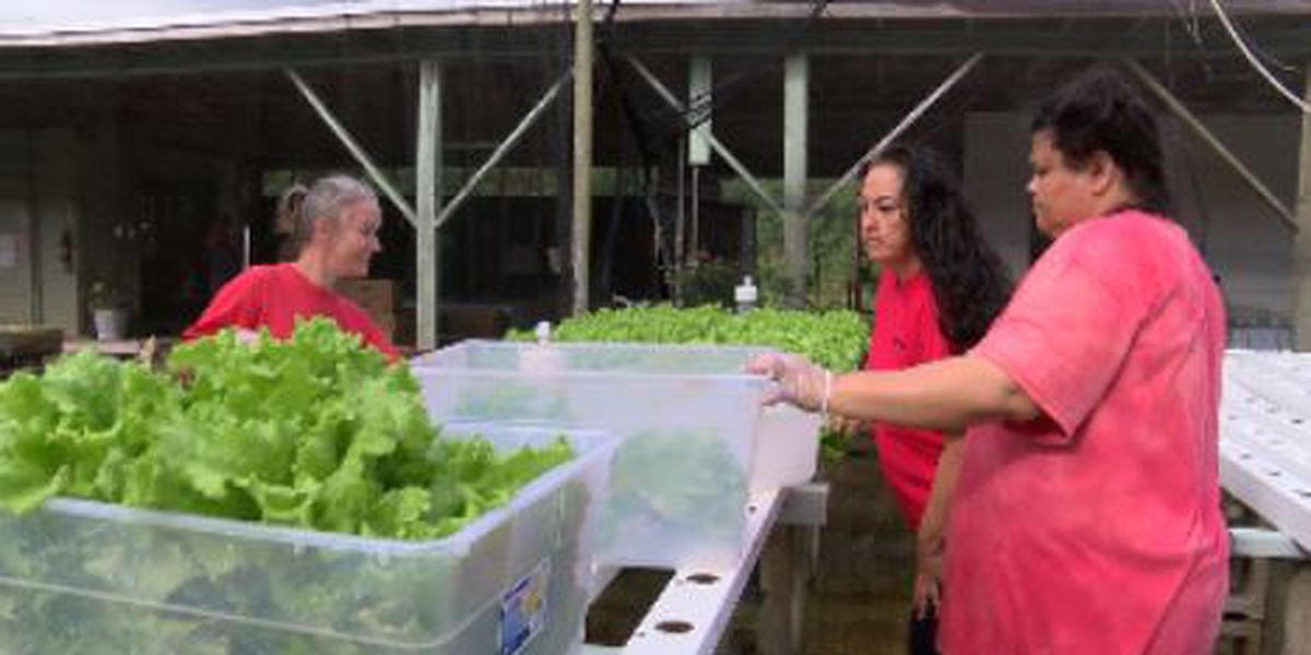 One lettuce head at a time, farming program rooted at women's prison changes lives