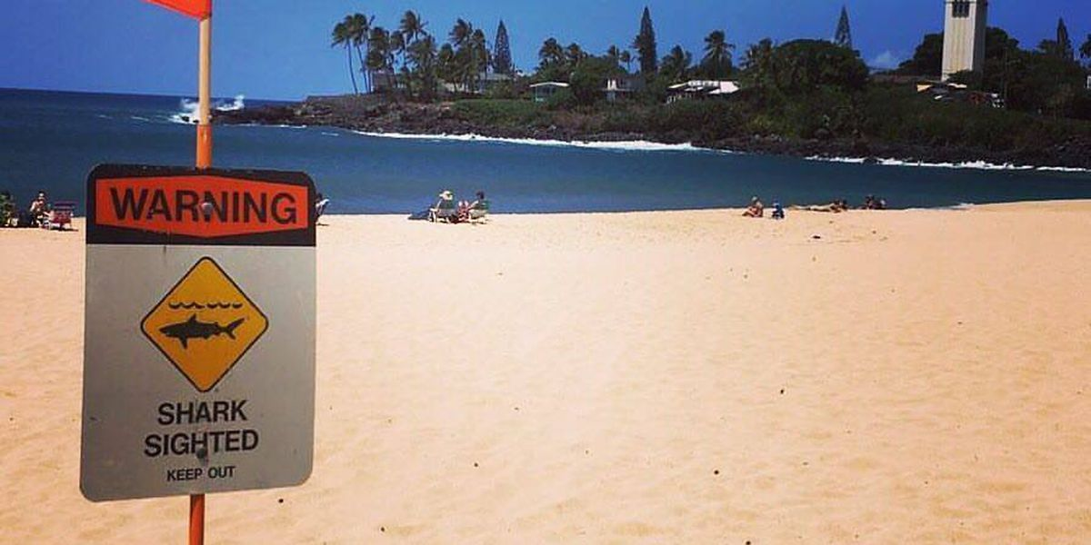 Sharks spotted in Waimea Bay for fourth day