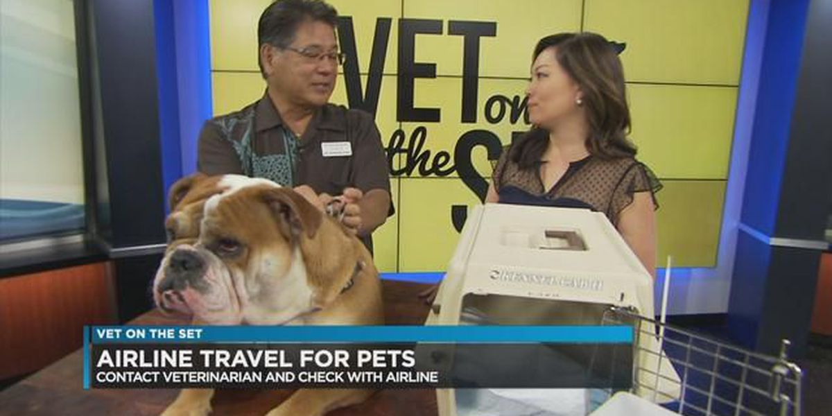 Vet on Set: New policy changes how you fly with your pet