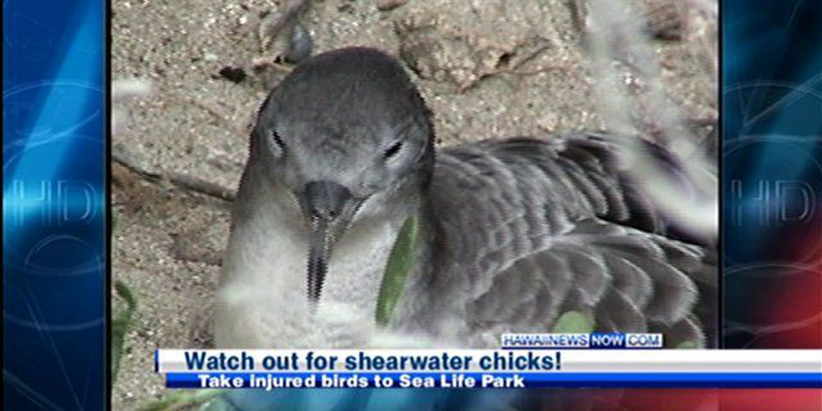 Public asked to look out for downed seabirds