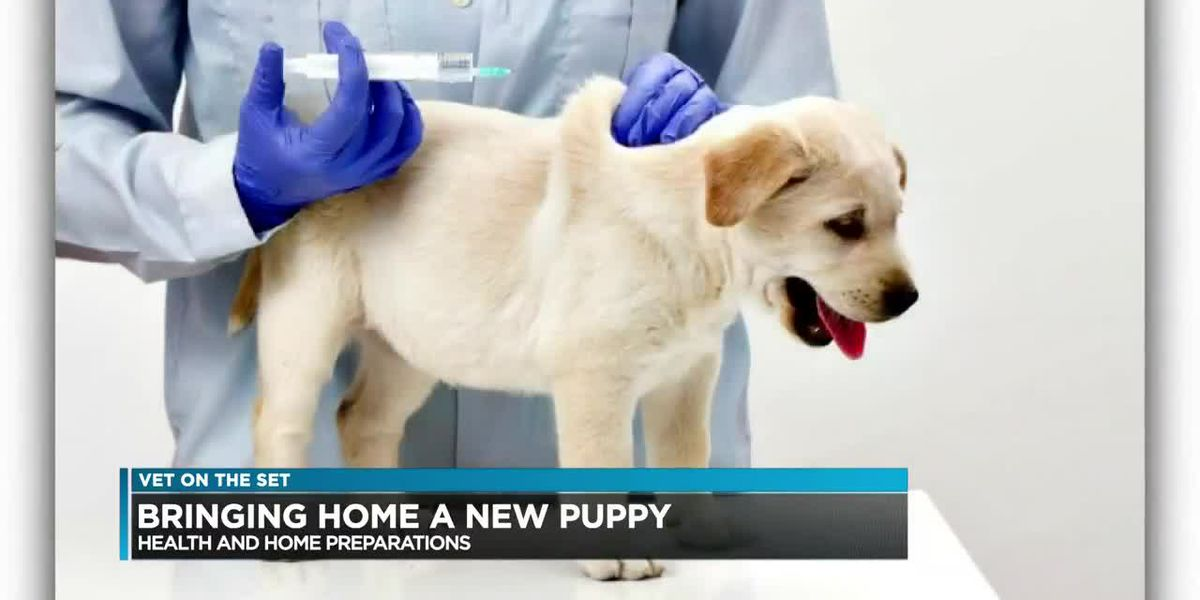Vet on the Set: Importance of checking the health of dog when adopting